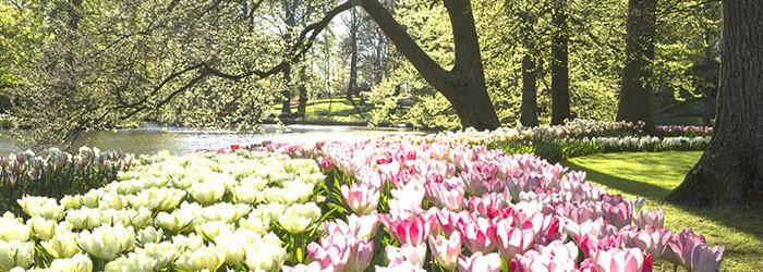 Blumenpracht Niederlanden: 1-2 Nächte im 4*Hotel inkl. Frühstück & Ticket für d. Keukenhof von April-Mai ab 67,50€ p.P.