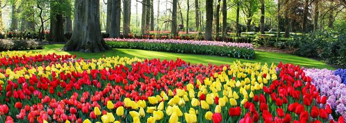 Tulpenblüte Amsterdam: 2-3 Nächte im Hotel inkl. Frühstück, Eintrittskarte & Fahrradtour ab 138€