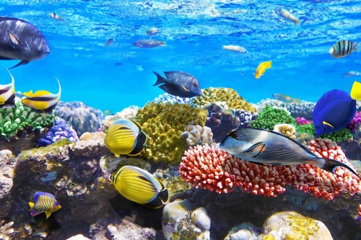 Hurghada Pickalbatros