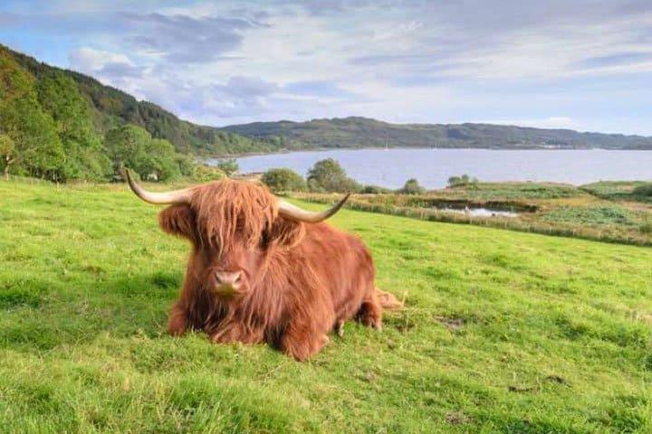 Schottland Rundreise Bueffel