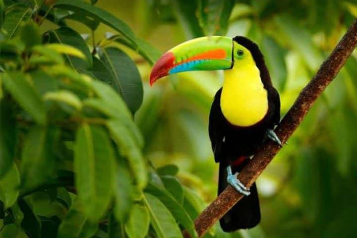 Costa Rica Rundreise Kakadu