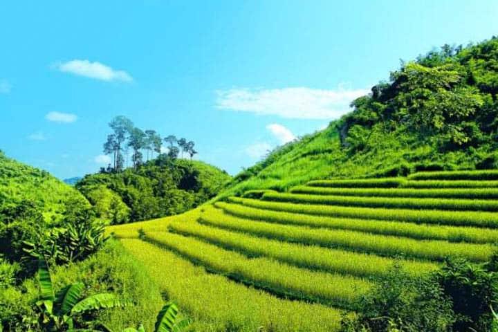 Thailand Rundreise Reisfelder