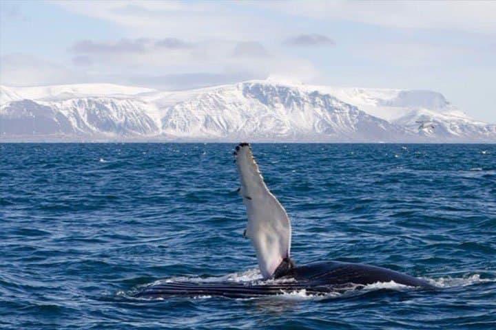Reykjavik Städtereise Wal
