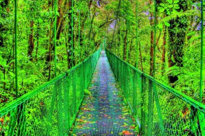 Costa Rica Rundreise Angebot Regenwald