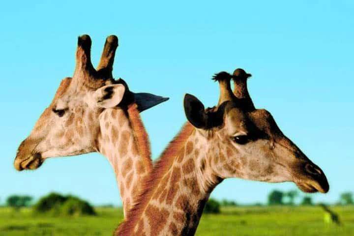 Safari Kenia Angebot