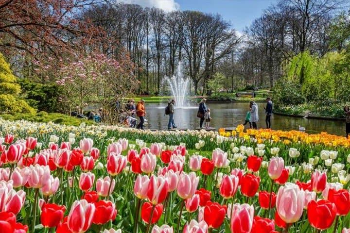 Tulpenblüte Holland Keukenhof Angebot