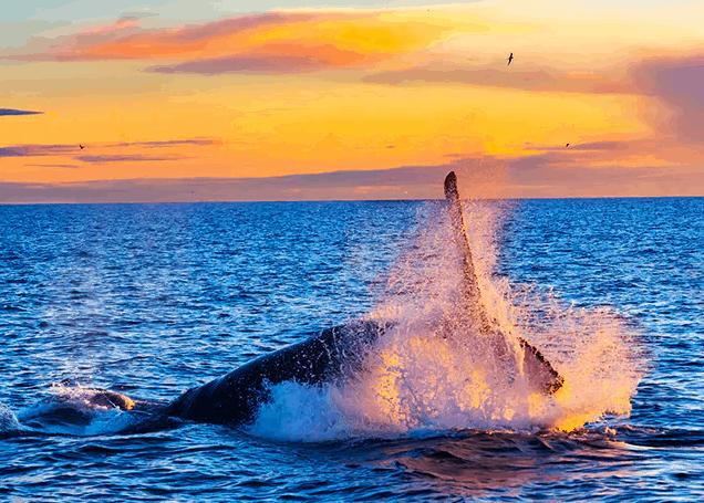 Reykjavik Städtereise Wale