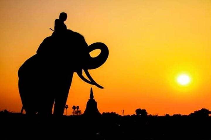 Thailand Rundreise Elefant