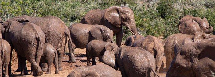 Die besten Safaris in Afrika